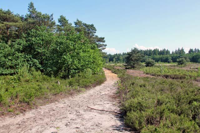Tourist-Info-Het-Reestdal_natuur-tuinen_boswachterij-Staphorst-de-zwarte-dennen-heide