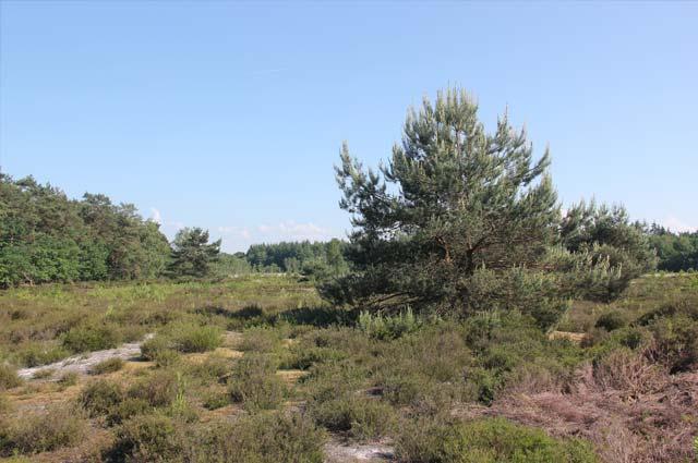 Tourist-Info-Het-Reestdal_CT_natuur-tuinen_Boswachterij-Staphorst_heide