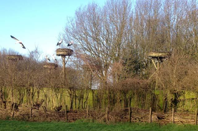 Tourist-Info-Het-Reestdal_CT_natuur-tuinen_ooievaarsstation-de-Lokkerij-ooievaarsnesten-