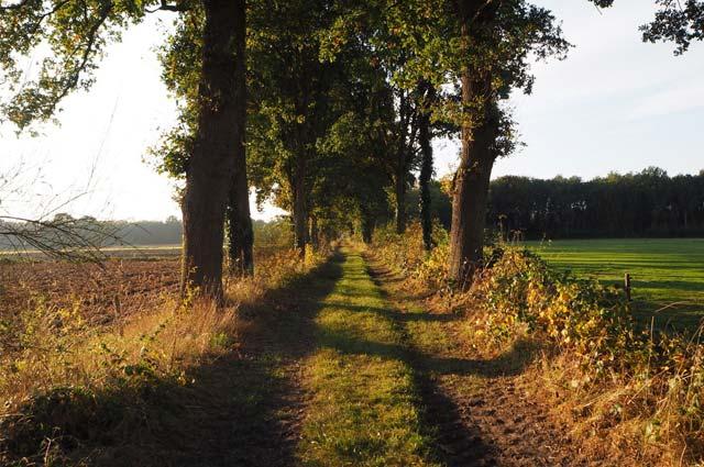 Tourist-Info-Het-Reestdal_CT_kunst-cultuur_erfgoed_kerk-ijhorst-allee-kerkenpad