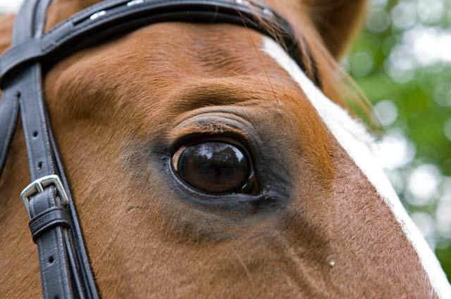 Tourist-Info-Het-Reestdal_CT_bekijkendoen_recreatie-vrije-tijd_paardensport_hippisch-paarden-evenement-outdoor-Zuidwolde (2)