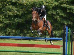 concours-hippique-paarden