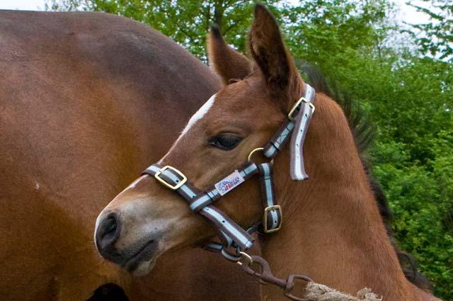 Tourist-Info-Het-Reestdal_CT_bekijkendoen_recreatie-vrije-tijd_paardensport_hippisch-paarden-evenementen-overzicht