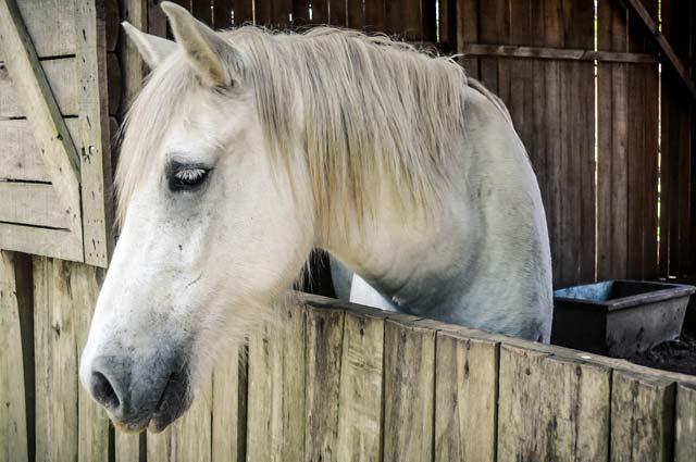 Tourist-Info-Het-Reestdal_CT_bekijkendoen_recreatie-vrije-tijd_paardensport_overnachten-met-paardenl
