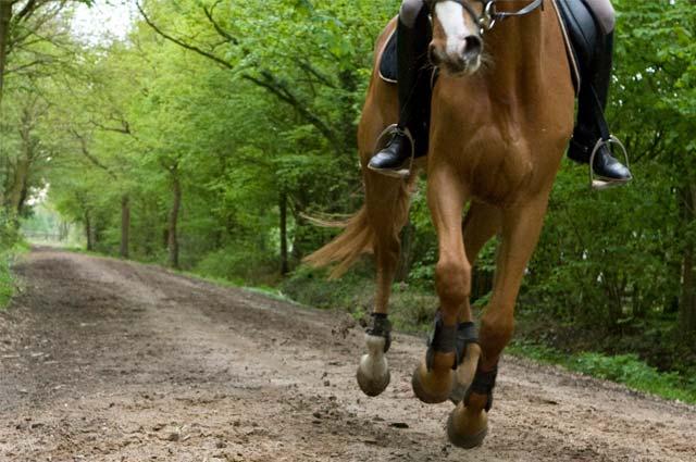 Tourist-Info-Het-Reestdal_CT_bekijkendoen_recreatie-vrije-tijd_paardensport_paardenroute-in-draf-door-het-Reestdal