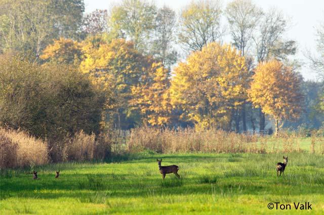 Tourist-Info-Het-Reestdal_natuur-tuinen_Staphorsterveld-Veerslootlanden-reeen