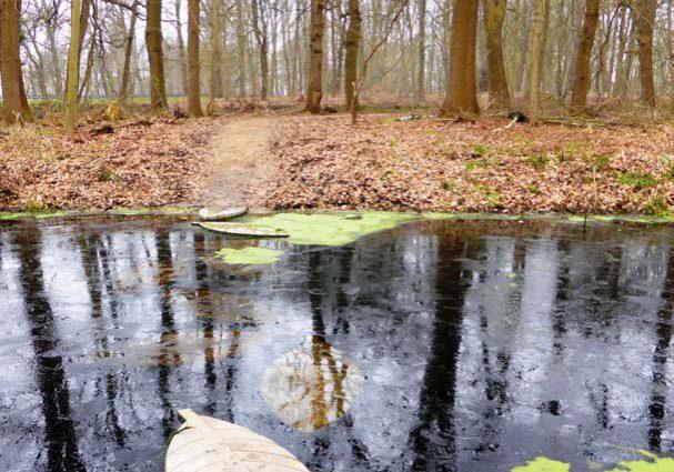Tourist-Info-Het-Reestdal_CT_bekijkendoen_recreatie-vrije-tijd_trail-running-Schans-water